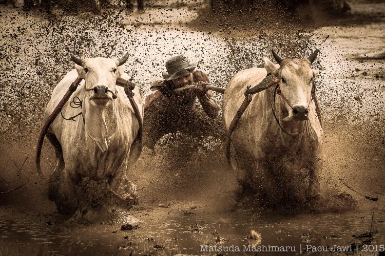 Bull Racing