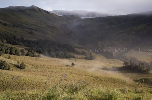 dreamy ... dreamy landscape
